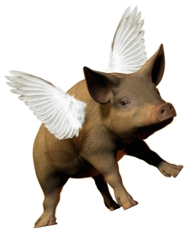 Pigs Fly!
